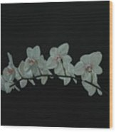 White Orchids No.2 Wood Print