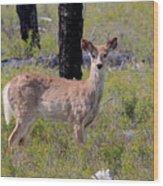 White-tailed Deer Wood Print
