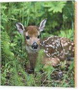 White-tailed Deer Odocoileus Wood Print