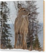 White-tailed Deer Three Wood Print