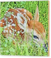 White-tailed. Virginia Deer Fawn Wood Print