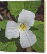 White Trillium 3 Wood Print