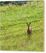 Whitetail Deer And Hay Rake Wood Print
