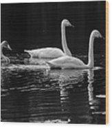 Whooper Swan Family Wood Print