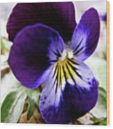 Wild Ground Flowers Wood Print