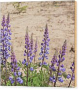 Wild Lupine Flowers Wood Print