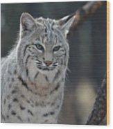 Wild Lynx Cat Wood Print