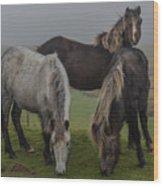 Wild Ponies On The Preseli Mountains Pembrokeshire Wood Print