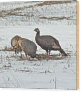 Wild Turkey - Meleagris Gallopavo Wood Print