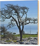 Wind Distorted Tree. Wood Print