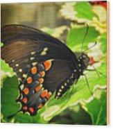 Wings Of Fancy Wood Print