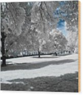 Winter Wood Print