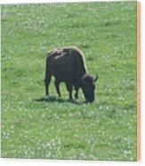 Wisconsin Buffalo Wood Print