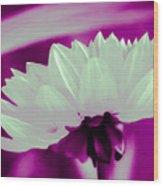 White Chrysanthemum Wood Print