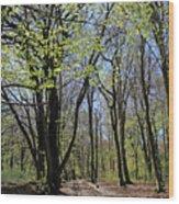 Woodland Walk England Wood Print