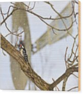 Woodpecker And Windmill Wood Print