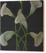 Woollybear Wood Print by Ron Sylvia