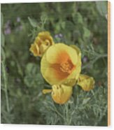 Yellow And Orange Poppy Wood Print