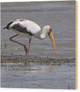 Yellow Billed Stork Wood Print