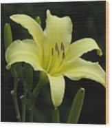 Yellow Bloom Wood Print