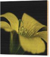 Yellow Clover Wood Print