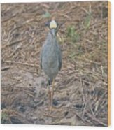 Yellow Crowned Night Heron At Tidal Creek Wood Print