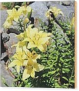 Yellow Day Lillies Wood Print