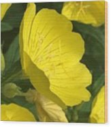 Yellow Evening Primrose Wood Print