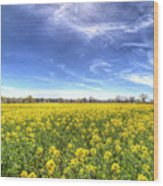 Yellow Fields Of Summer Wood Print
