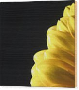 Yellow Gerbera Flower Wood Print