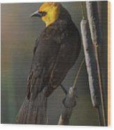 Yellow Headed Blackbird On Cattails Wood Print