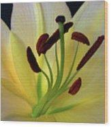 Yellow Wood Print by Robert Pilkington