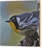 Yellow Throat Warbler Wood Print