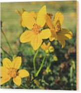 Yellow Wildflowers In A Field Wood Print