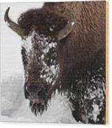 Yellowstone Buffalo Wood Print