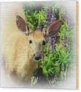 Young Buck Among The Lupin Wood Print