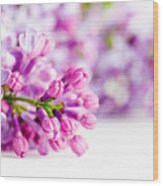 Young Spring Lilac Flowers Blooming Wood Print