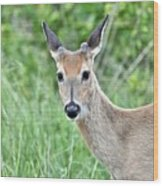 Young White-tailed Buck In Velvet Wood Print
