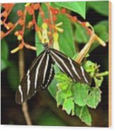 Zebra Longwing On Firebush  Wood Print