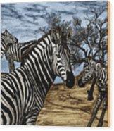 Zebra Outback  Wood Print