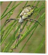 Zebra Spider Wood Print