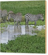 Zebras In The Swamp Wood Print