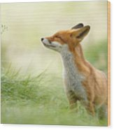 Zen Fox Series - Zen Fox Wood Print