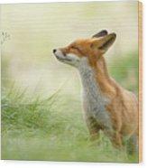 Zen Fox Series - Zen Fox Wood Print