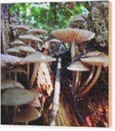 10-15-16--0704 Don't Drop The Crystal Ball Wood Print