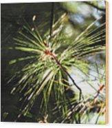 10-15-16--0747 Don't Drop The Crystal Ball Wood Print