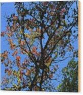 10-15-16--0776 Blue Sky # 2 Don't Drop The Crystal Ball Wood Print