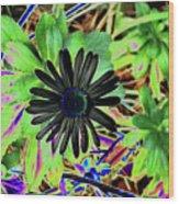 10-15-16--4996 # 2 Montauk Daisy Don't Drop The Crystal Ball Wood Print