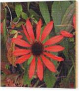 10-27-16--1977 Echinacea Cheyenne Spirit Don't Drop The Crystal Ball Wood Print
