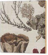 Aquatic Animals - Seafood - Algae - Seaplants - Coral Wood Print